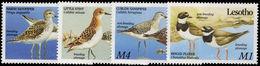 Lesotho 1989 Migrant Birds Unmounted Mint. - Lesotho (1966-...)