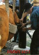 CPM - Paul Dutreix Ferre Une Vache Limousine  La Pose Du Fer - BUJALEUF Canton De Eymoutiers 87 Haute Vienne - Ed. J-L-D - Artisanat