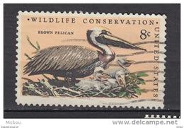 USA, Pelican, Oiseau, Bird, Nid, Neast - Pélicans