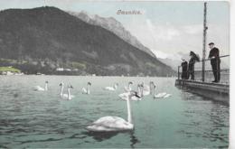 AK 0249  Gmunden - Verlag Brandt Um 1907 - Gmunden