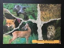 Animal Groeten Uit Hummelo - Animals