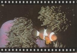 Cartolina Dalla Tailandia (barriera Corallina, Pesci) Per Spinea (vedi Foto) - Tailandia