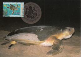 Australia 1995 Maxicard Sc 1462-1464 Sea Life The World Down Under - Maximum Cards