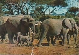 Cartolina Dal Gaban (Fauna, Elefanti ) Per Bassano 1974 (piccolo Strappo In Basso Centro) - Gabon
