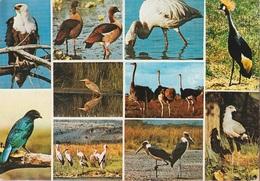 Cartolina Dalla Uganda (uccelli Africani) Per Trieste 1978 (vedi Foto) - Uganda