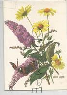 Carte Double De Vœux. Bouquet De Lilas Et Fleurs Des Champs. Papillons. Signée Barbara Everard - Fleurs