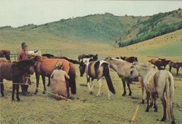 MONGOLIA - Mare Milking - Zabhan Aimak - Mongolei