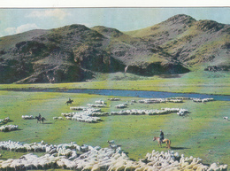 MONGOLIA - Övörkhangai - Sheeps - Mongolei