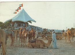 UAE - Camel Race - Verenigde Arabische Emiraten