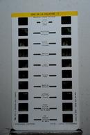 LESTRADE :     ZOO DE LA PALMYRE 1  ( M.CAILLE DIRECTEUR ) - Visionneuses Stéréoscopiques