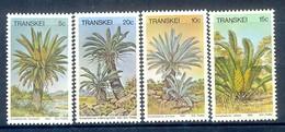 D25- Transkei 1980 Pflanzen Palmfarne. Flora Tree Plants. - Transkei
