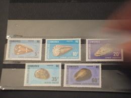 COMORES - 1971 CONCHIGLIE 5  VALORI - NUOVI(++) - Isole Comore (1975-...)