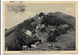 San Pellegrino In Alpe (Lucca). Veduta - Mucche Al Pascolo. - Lucca