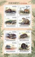 Mozambique 2012 Fauna  Rodent ,rats - Mozambique