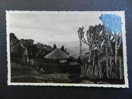 19938) LOCALITA' DA IDENTIFICARE SEMBRA AFRICA NON VIAGGIATA FOTOCARTOLINA PRIVATA - Cartoline