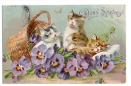 (chats) 332, Doux Souvenir, Chats Chatons, Relief Gaufrée Embossed - Chats