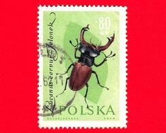 POLONIA - POLSKA - Usato - 1961 - Insetti - Scarafaggio - Stag-horned Beetle - 80 - 1944-.... Repubblica