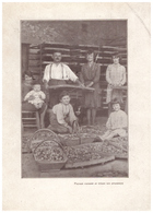 1931 - Iconographie Documentaire - Agen (Lot-et-Garonne) - Paysan Cuissant Et Triant Ses Pruneaux - FRANCO DE PORT - Vieux Papiers