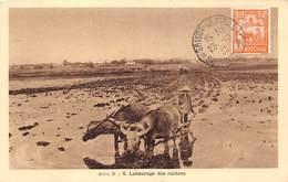 Viet Nam.n°57695.labourage Ddes Rizières.carte Maximum - Viêt-Nam