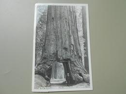 ETATS UNIS CA CALIFORNIA WAWONA TREE YOSEMITE PARK - Yosemite