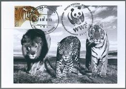 B4422 Russia USSR CM Fauna Animal Tiger (50 Rubel) ERROR - 1992-.... Federation