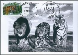 B4423 Russia USSR CM Fauna Animal Tiger (100 Rubel) ERROR - 1992-.... Federación