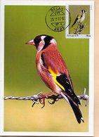 MAXIMUM CARD- MAXICARD- MAXIMUM KARTN- CARTE MAXIMUM- PORTUGAL - (AÇORES) - OISEAUX- Regulus Regulus -TIMBRE PERSONALISÉ - Sperlingsvögel & Singvögel