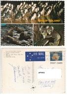 Australia Victoria Melbourne. Phillip Island Pinguini Leoni Marini Koala - Melbourne