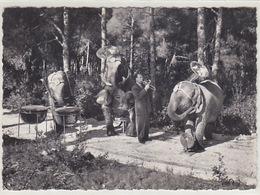 Hans Kossmayers Musizierende Elephanten         (A-77-170701) - Elefanti
