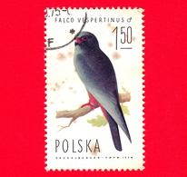 POLONIA - Usato - 1975 - Uccelli Rapaci - Falco - (Falco Vespertinus), Male- 1.50 Zl - 1944-.... Repubblica