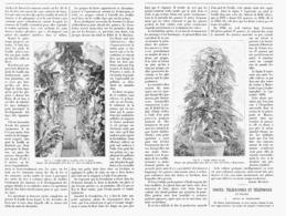 LA CULTURE  De La VANILLE En SERRE Pour La PRODUCTION DES GOUSSES  1900 - E. Aromatic Plant