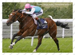 Ukraine   Postcard   Frankel   Leading Thoroughbred Racehorse   Horse - Cavalli