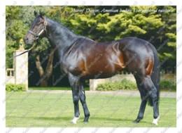 Ukraine   Postcard   Shareef Dancer   Leading Thoroughbred Racehorse   Horse - Cavalli
