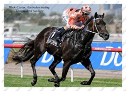 Ukraine   Postcard   Black Caviar   Leading Thoroughbred Racehorse   Horse - Cavalli