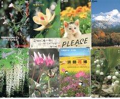 8 Télécartes Japon Japan Chat Cat  Katze Fleur Flower Phonecard (D 520) - Fleurs