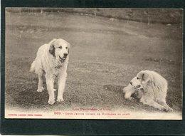 CPA - LES PYRENEES - Deux Jeunes Chiens De Montagne En Arrêt - Hunde