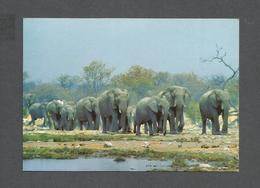 ANIMAUX - ANIMALS - AFRICAN ELEPHANTS - KRUGER NATIONAL PARK - Éléphants