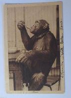 """""""Affen, Schimpansen"""" 1924,  Missie ♥  - Affen"""