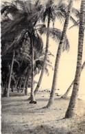 ** Carte Photo ** AFRIQUE NOIRE - GABON - PORT GENTIL :  Cocotiers En Bord De Mer Coconut Palm De Coco - Format CPA - - Gabon