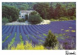 La Provence Havre De Lavande (2 Scans) - Provence-Alpes-Côte D'Azur