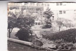 JARDIN DE LA UNESCO, PARIS. PHOTO ORIGINAL CIRCA 1960's SIZE 10x7cm  - BLEUP - Places