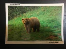 Osos - Bären