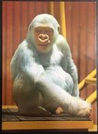 Monos - Monos