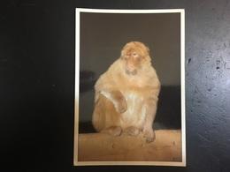 Monos - Monkeys
