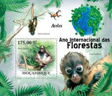 Mozambique 2011 Fauna  Spider Monkeys - Mozambique
