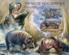 Mozambique 2011 Fauna - Hippos - Mozambique