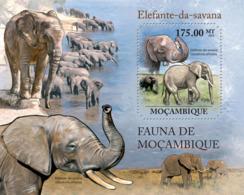 Mozambique 2011 Fauna- Elephants - Mozambique