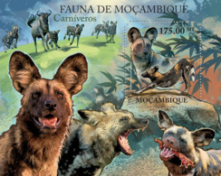 Mozambique 2011 Fauna– African Wild Dogs - Mozambique
