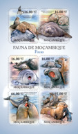 Mozambique 2011 Fauna Seals - Mozambique