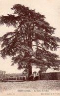 """CPA  78   NOISY-LE-ROI---LE CEDRE DU LIBAN---1916--TAMPON VIOLET """" 81e REGT D'ARTILLERIE FORT DE NOISY """" - Autres Communes"""